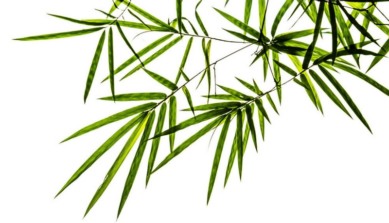 The Benefits of Bamboo Image 01